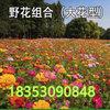 哪里有卖花草种子的多少钱一斤