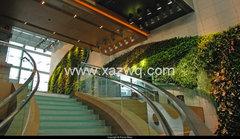 西安室内植物墙养护