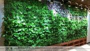 植物墙:几种适合植物墙的绿色植物