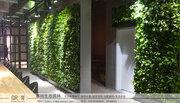 不是所有家庭都能满足植物墙安装条件,有什么方式可以补充?