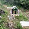 遵义中蜂养殖