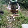 遵义蜜蜂养殖场