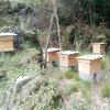 遵义养蜂场