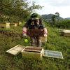 遵义蜜蜂养殖基地