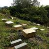 遵义蜜蜂养殖基地在哪里