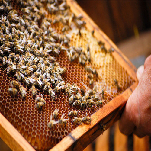 遵义蜂种批发价格