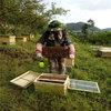 都匀中华蜂养殖
