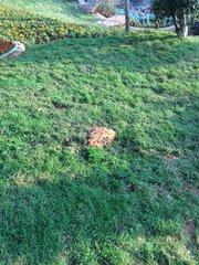 贵州草坪声响安装