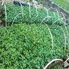 藤椒苗的种植基地