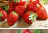 李家沱草莓采摘電話
