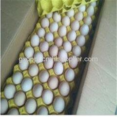 钦州红心海鸭蛋销售