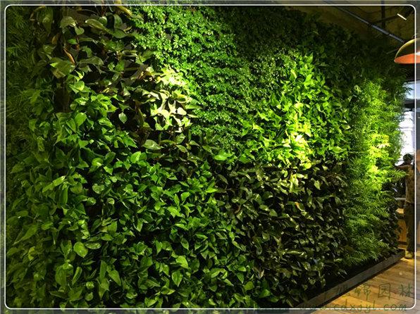 化植物手机壁纸