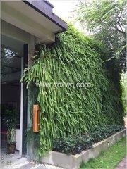 成都室外植物墙