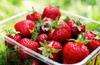 重慶什麽地方自己可以去摘草莓
