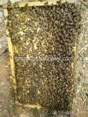 遵义蜂蜜养殖培训