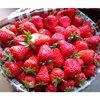 泗县草莓批发