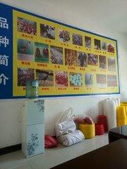 贵州鸡苗批发供应商