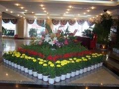 貴陽花卉租賃服務
