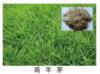貴陽草種銷售價格