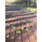 给北京荣创岩土工程股份有限公司供应大量透水砖植草砖广场砖