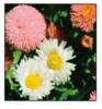 貴州花海草種花種批發
