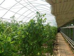 贵阳蔬菜种植大棚搭建安装