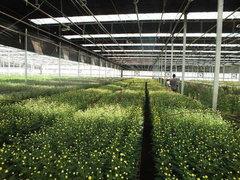 贵阳蔬菜种植大棚设计