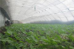 贵阳蔬菜种植大棚施工厂家