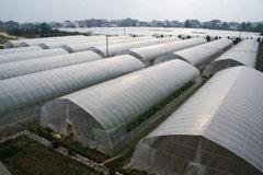贵阳塑料温室大棚