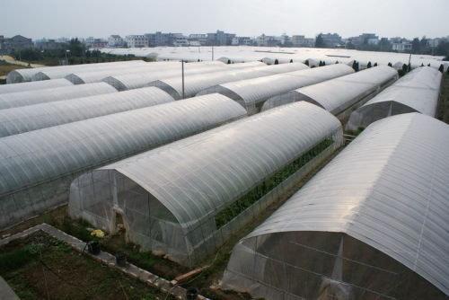 贵阳温室大棚厂家