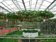 贵阳温室大棚建造