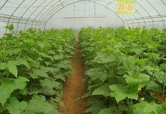 贵阳蔬菜种植大棚厂家安装