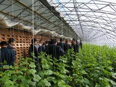 贵阳蔬菜大棚建设
