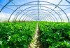 贵阳蔬菜大棚建设价格