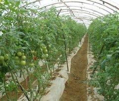 贵阳蔬菜大棚建造