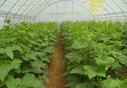 大棚蔬菜种植管理要点