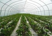 蔬菜大棚建设流程