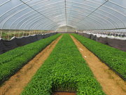蔬菜种植大棚的优势