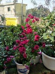 貴陽花卉銷售
