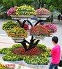 贵州景观树种类