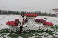 貴陽花卉租賃服務公司