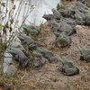乐山牛蛙苗养殖效益