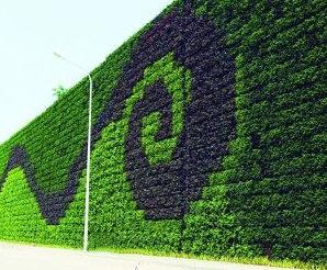 植物墻植物怎么選