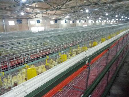 潍坊哪里有卖价格优惠的自动水线料线|养殖自动化喂料机