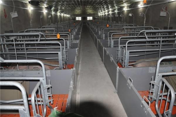 世纪润丰机械提供有品质的猪舍养殖设备|猪舍养殖设备