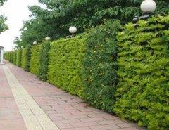 貴州植物墻制作報價