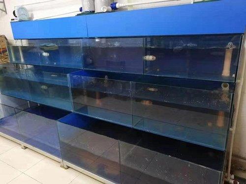 贵州酒店海鲜池图片