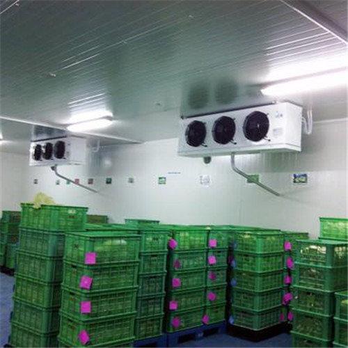 竞技宝网站竞技宝安卓——蔬菜冷藏库可以放多久