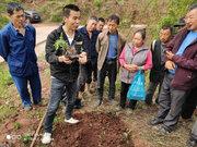 藤椒种植技术指导